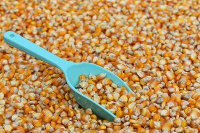 Preço do milho deve baixar no mercado interno